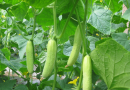 2016年10月重庆市蔬菜种子价格走势