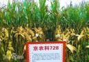 """""""两粒""""种子助京津冀三地农民增收4亿"""