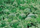 浙江省农业厅发布2017年种植业主导品种