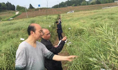 南充市召开小春示范品种田间现场评议会