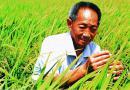 袁隆平国际杂交水稻种业硅谷在成都开工建设