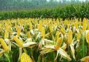 吉林省2019年农业主导品种